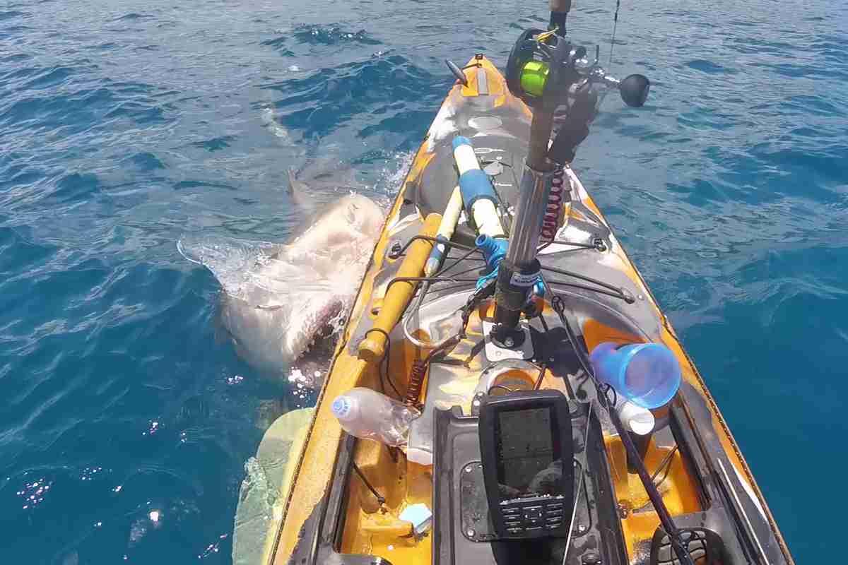Dubrovnik: cápa a strandnál, kiküldték a strandolókat a vízből